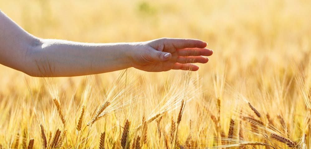 рука над пшеницей, via shutterstock
